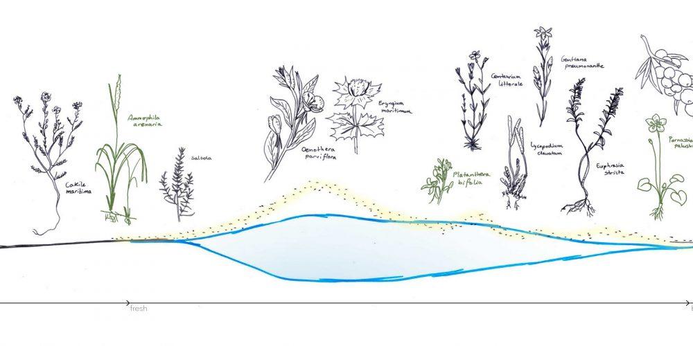 I Island dunes: section