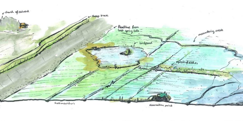 III Mainland marsh: overview