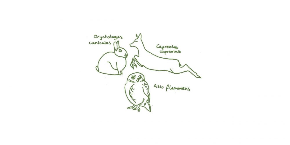 I Island dunes: inhabitants
