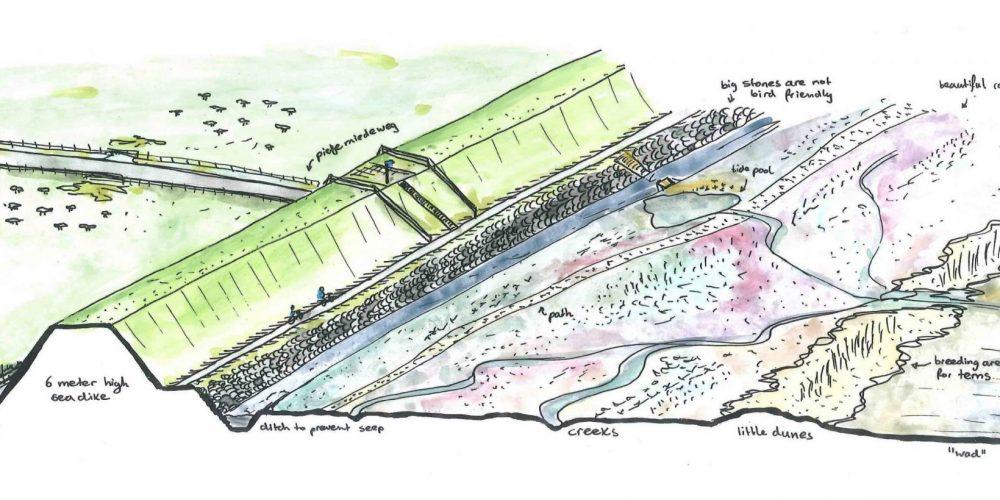 II Island marsh: overview