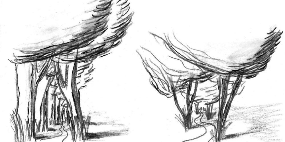 Tilia europaea - Common Linden